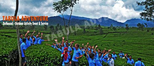 Paket Wisata Tea Walk Wisata Tea Walk Perkebunan Teh