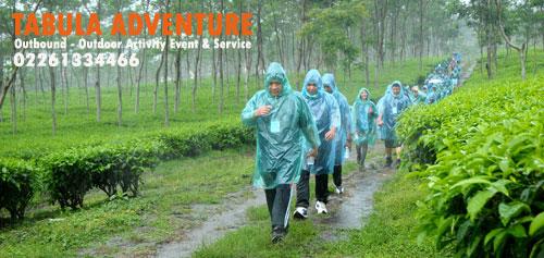Wisata Tea Walk Perkebunan Teh